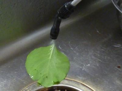 溶液は粘性がありますが、どうにか噴霧器のノズルの先から出ます