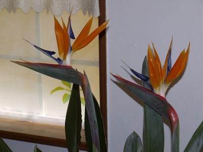まさに鳥のような花です