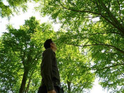 館林市の群馬県立美術館にて、「桂の木漏れ日」
