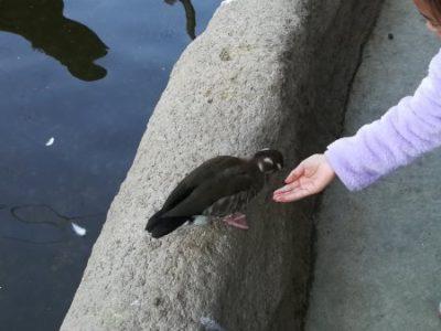 園内に放し飼いにされている珍しい鳥や動物に、エサをやれます