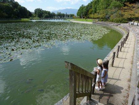 敷地内にある公園。鯉や亀が気持ちよさそうに泳いでいました。