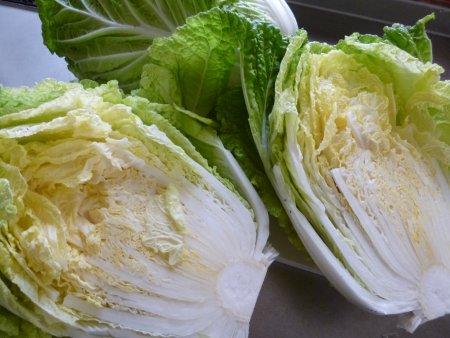 白菜収穫。12月に入って収穫しました。虫取りの効果があり、上手に出来ていました。